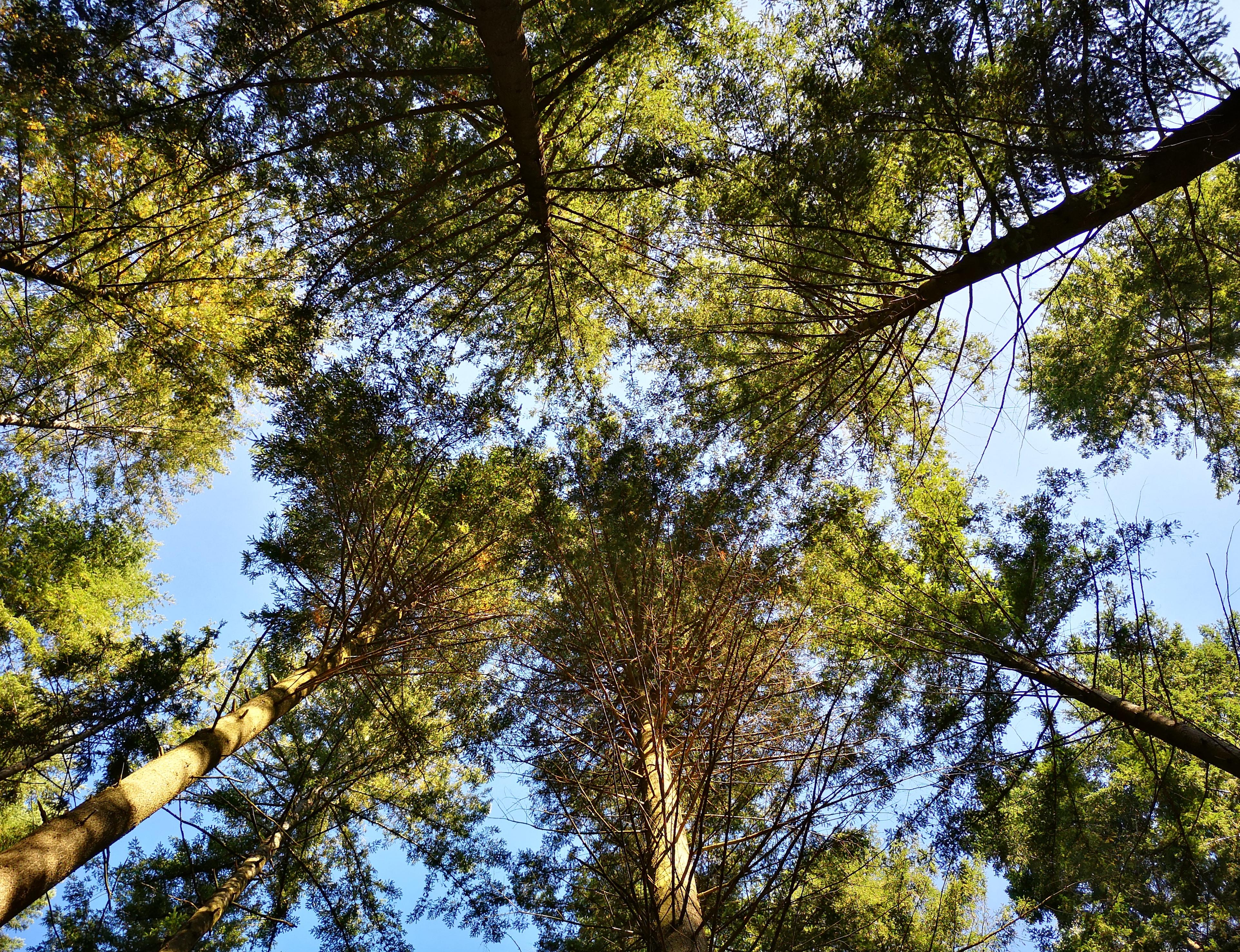 Der Schopfheimer Wald